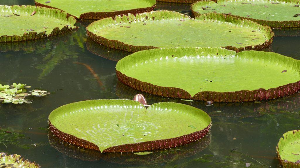 Национальный ботанический сад